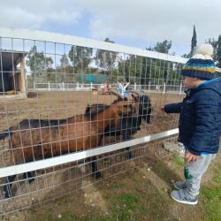 Petrides Farm Kids Adventure
