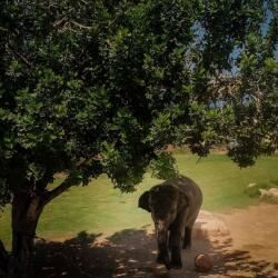 Pafos Zoo Elephants